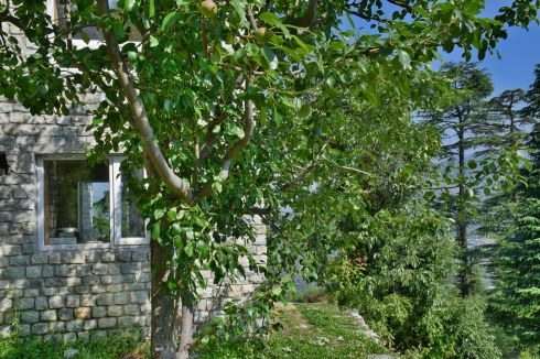 Fruit trees around the homestay